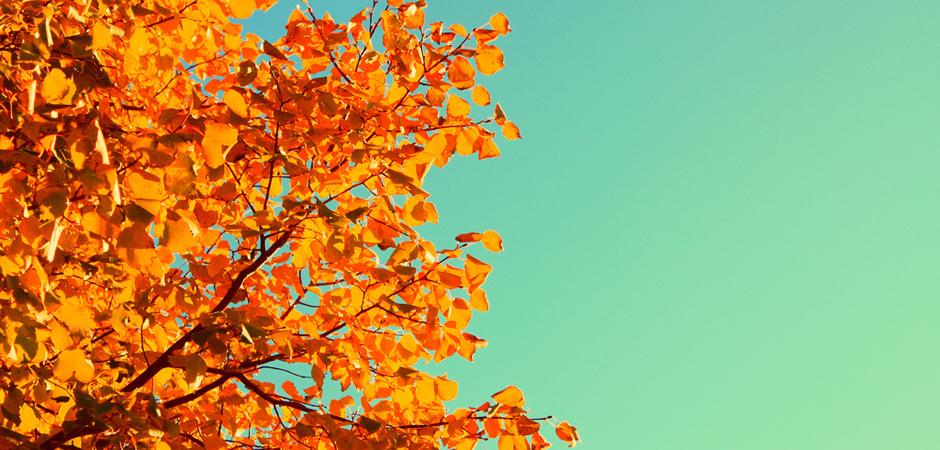 Aqua and Orange Autumn slide