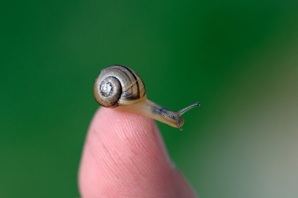 Snail FB