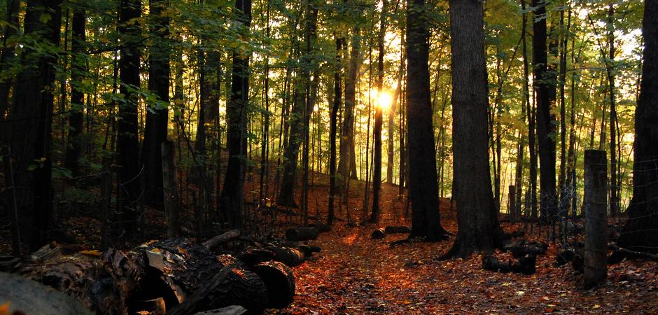 Woods In Fall slide