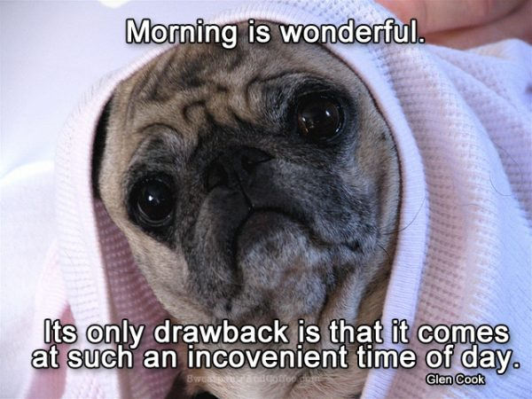 Pug Under Covers FB