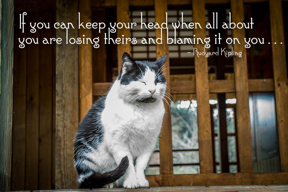 Zazen Cat In Meditation pic