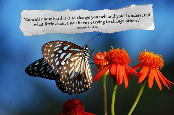 Blue Tiger by challiyan ben franklin quote