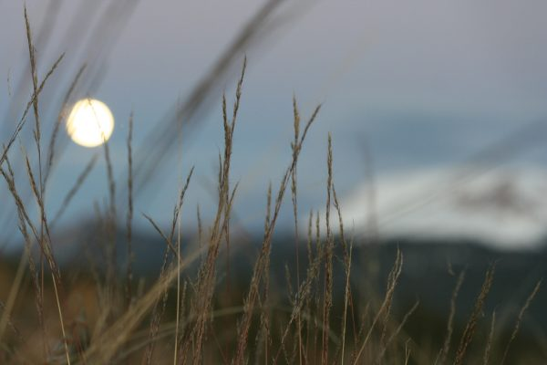 Creative Commons License Rocky Mountain Moonrise by chedder is licensed under a Creative Commons Attribution 4.0 International License.