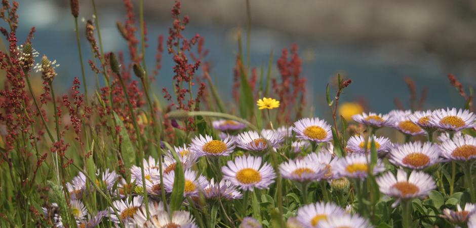 slide_Cliff Flowers by Sharon Mollerus