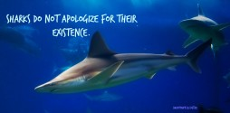 Sharks_do_not_apologize2_featuredimage