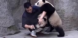 Baby Pandas taking medicine slide