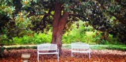 MagnoliaTrees - Version 2