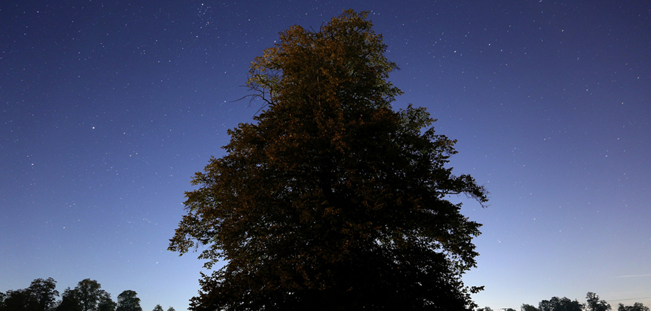 Misty Moonlight by Brian Tomlinson slide