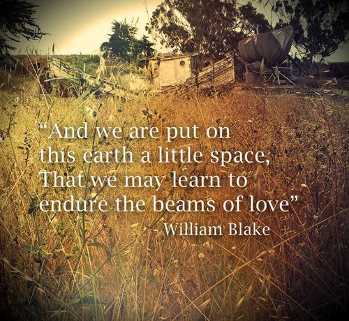 William Blake quote beams of love WP