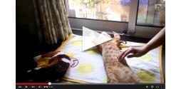 Feel Good Fix Cat slide