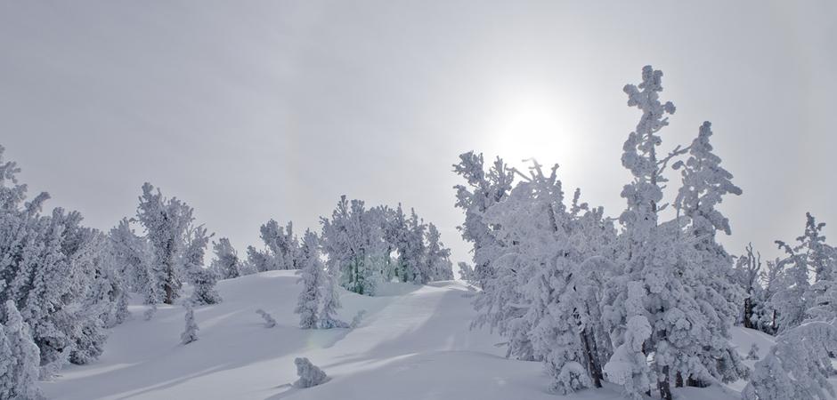 Winter Wonderland by Vincent Locke