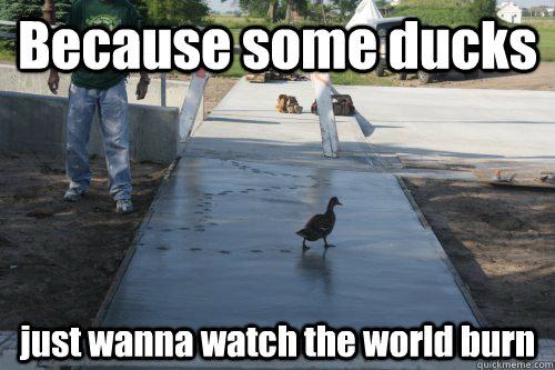 Duck Meme