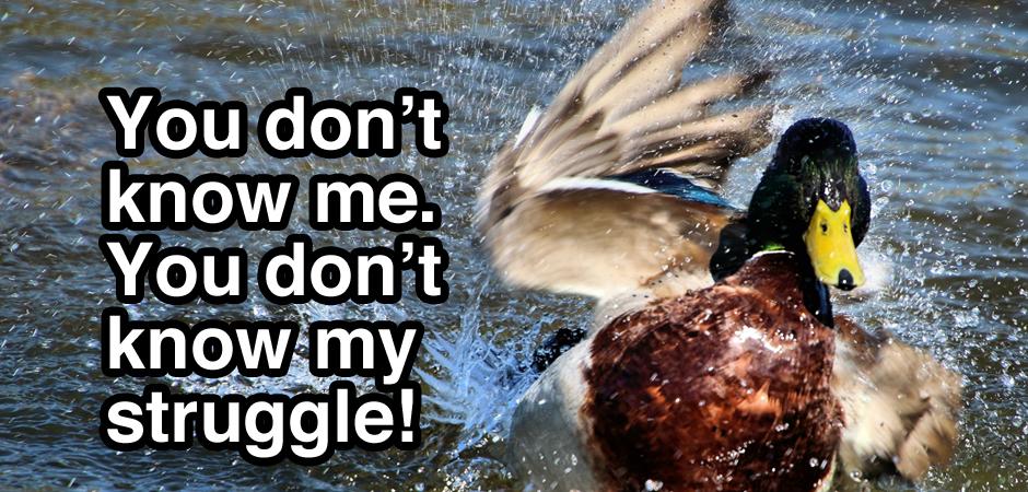Duck_slide