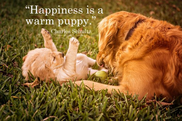 3 - Charles Schultz quote warm puppy