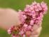 Child hand flowers_WP