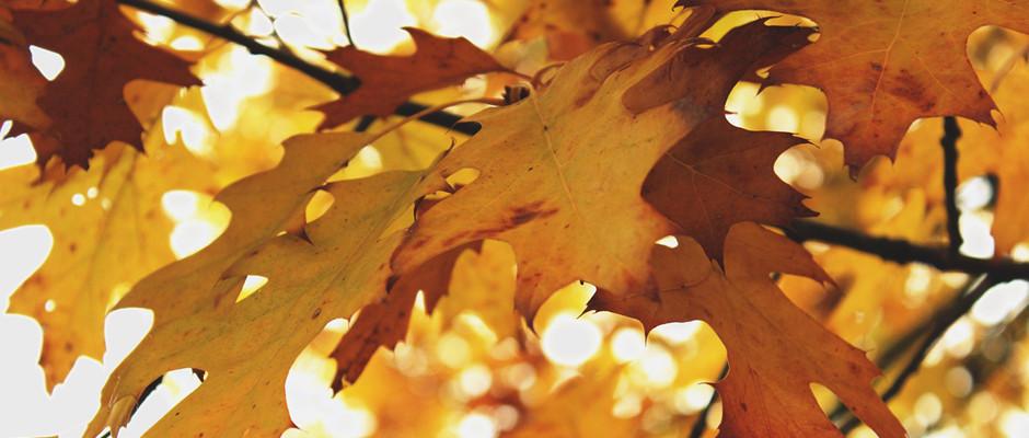 Fall leaves_WP
