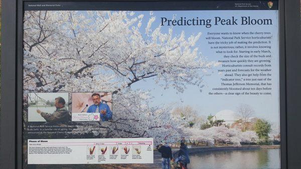 Predicting Bloom