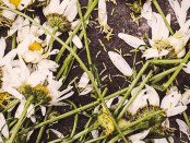 Dead-flowers-wp
