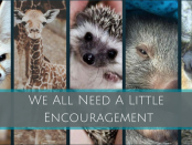 940x450 Header Baby Animal Quotes