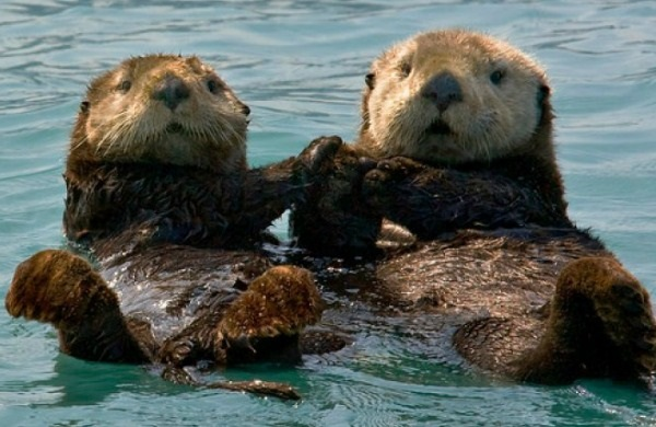 Lutraphobia is the fear of otters.