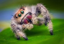 Arachibutyrophobia is the fear of jumping spiders.
