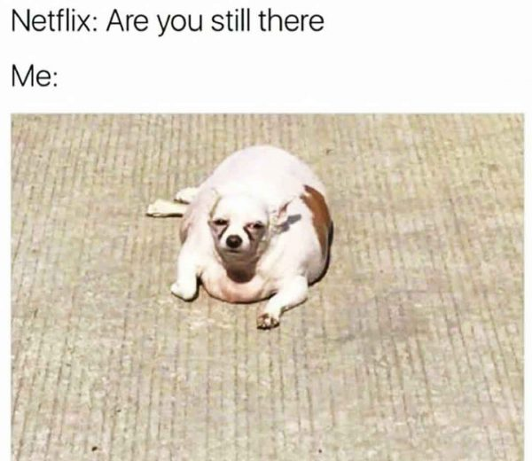 netflix are you still there meme