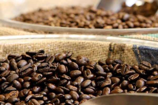 There are two types of coffee beans. What are they?