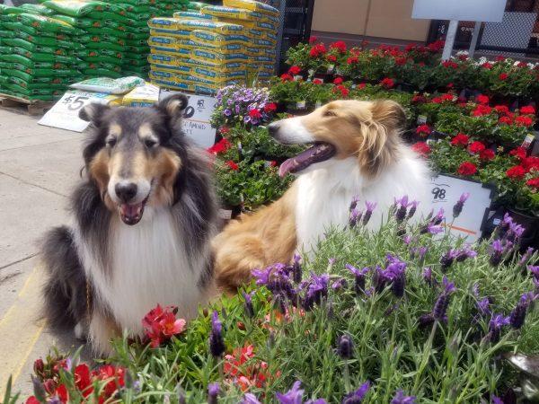 Pet safe gardens